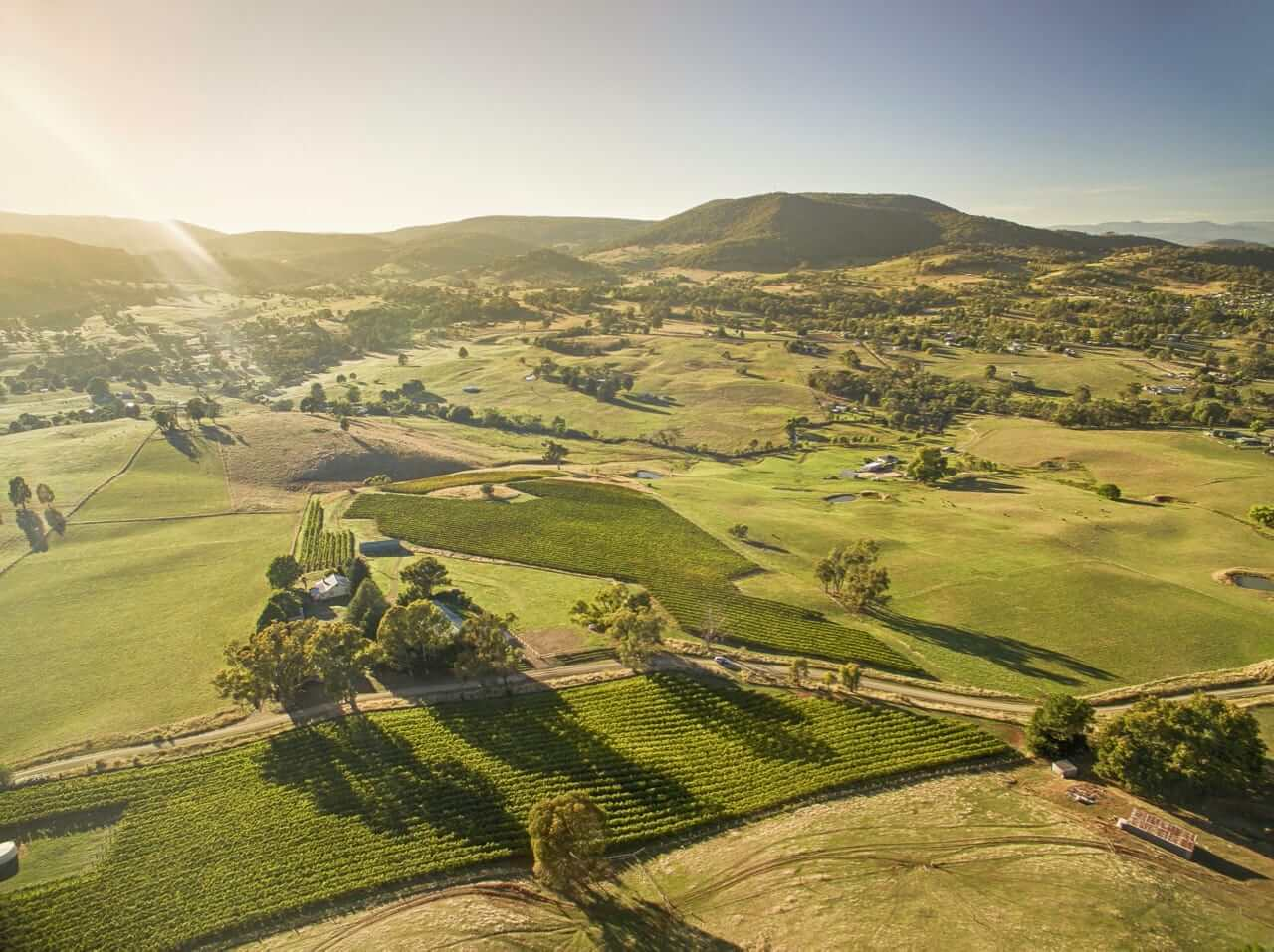 Johansen Wines Vineyard - photo credit Destination NSW